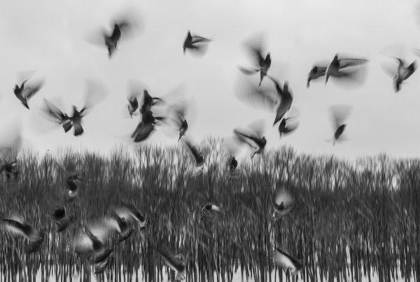birds-801778_1920